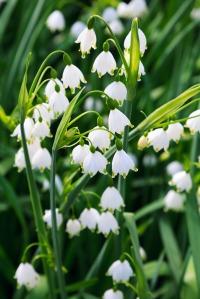 spring_snowflake_199021