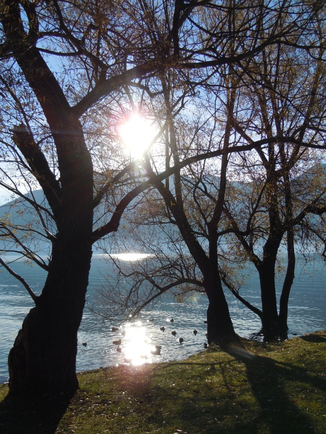 tree_sun_back_light